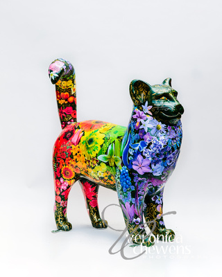 Veronica Chewens Photography: 2019 Cats &emdash; #31 Rainbow Garden Cat